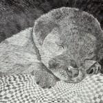 Serge Khlynovsky. Sleeping dog. Black ink. 2012.